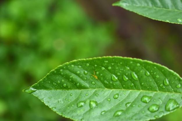 Druppels water op een groen blad