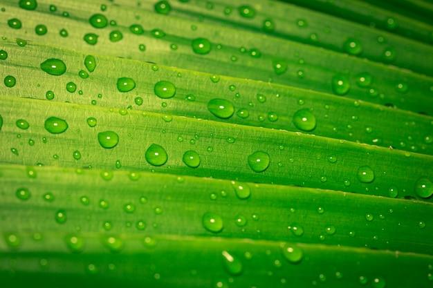 Druppels water op groene bladeren