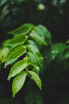 Druppels water op groene bladeren.