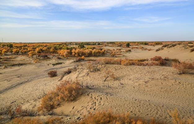Dry landscape view