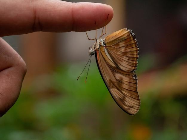 Dryas julia vlinder op de wijsvinger.