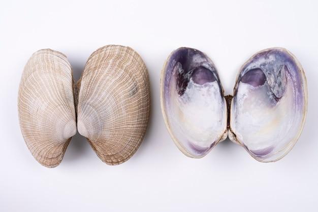 Dubbele zeeschelpen voor- en achterkant geïsoleerd op een witte achtergrond, longen concept. bovenaanzicht met textuur