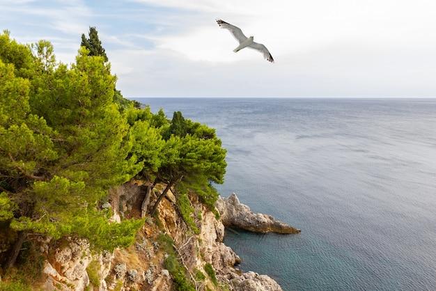 Dubrovnik zee kust resort landschap met zeemeeuw, kroatië
