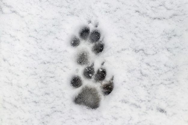 Duidelijke sporen van een hond in de winter in de sneeuw