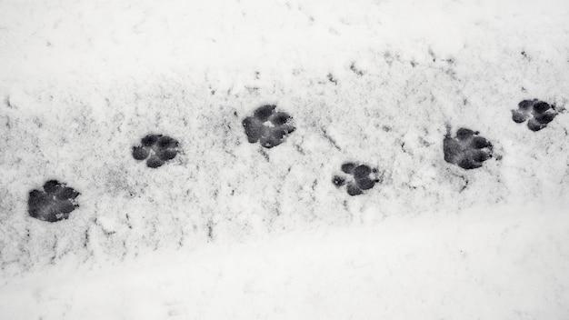 Duidelijke sporen van een hond op natte sneeuw