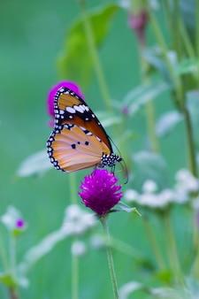 Duidelijke tiger butterfly op bloem