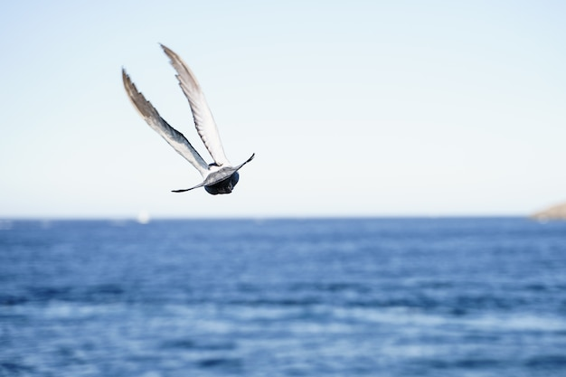 Duif die boven de zee vliegt. natuur concept