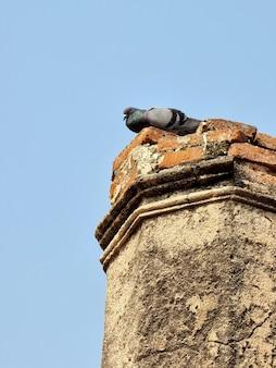 Duif rust op een oude post van een boeddhistische tempel op blauwe hemelachtergrond