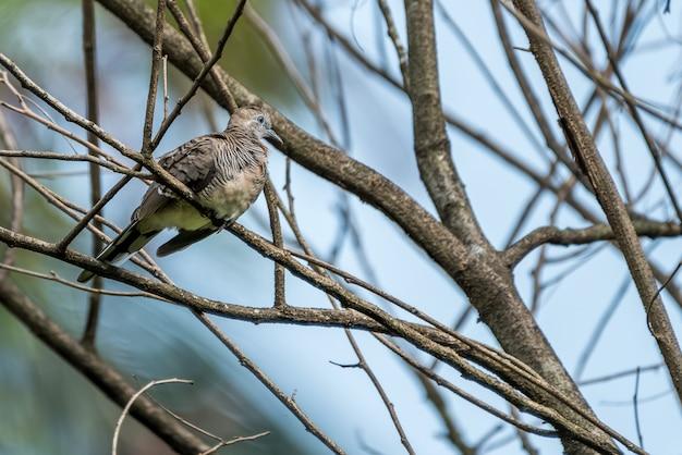 Duif-vogel zat op tak
