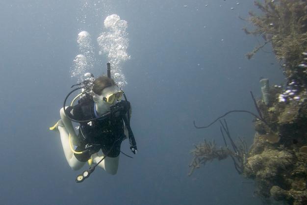 Duiker onder water, utila, baai-eilanden, honduras