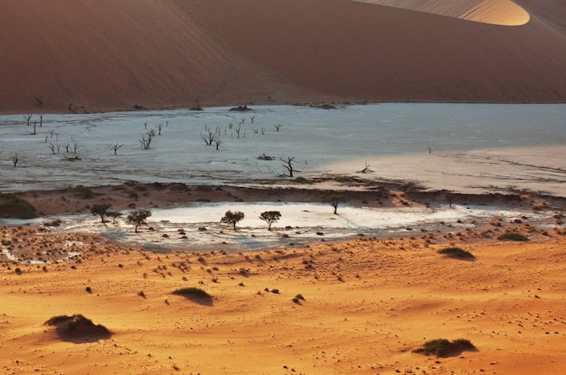 Duinen en dode acaciabomen in de namib-woestijn, dead vlei, sossusvlei, namibië, afrika. beroemde toeristische bestemming