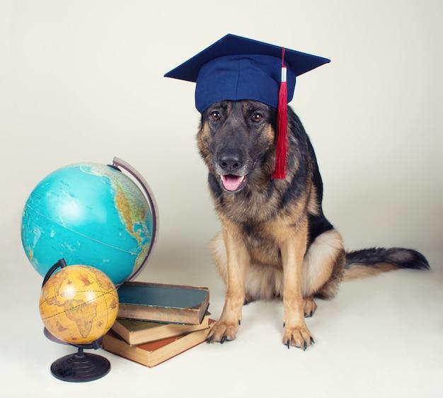 Duitse herder die een afstuderenpet draagt