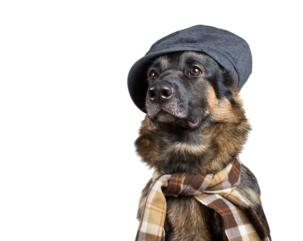 Duitse herder die een platte pet en een sjaal draagt