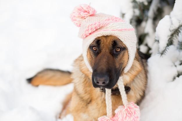 Duitse herdershond die de winterhoed draagt