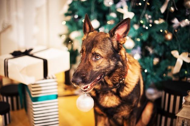 Duitse herdershond poseren in de buurt van kerstboom