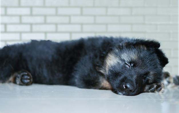 Duitse herdershond puppy slaapt op de vloer voor de muur