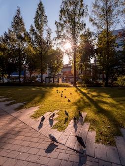 Duiven in het park