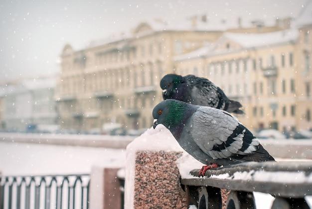 Duiven zittend op het hek van de kade in de winter tijdens een sneeuwval op de achtergrond van de oude stad.
