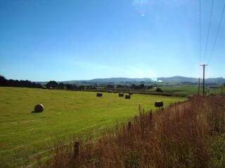 Dunedin landschap