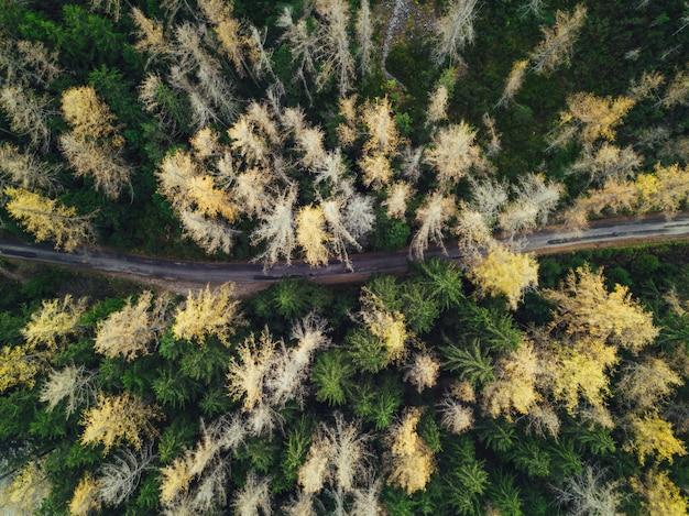 Dunne smalle weg in een bos geschoten vanuit een luchtfoto