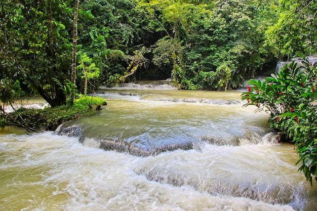 Dunns's river falls in jamaica in dunn's river falls park