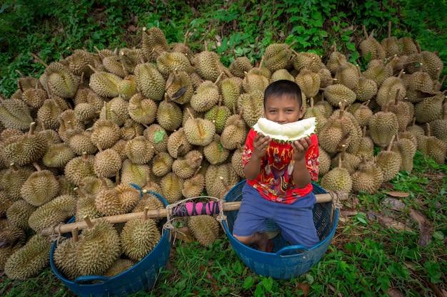 Durian-boeren voeren vanuit de durian-tuin