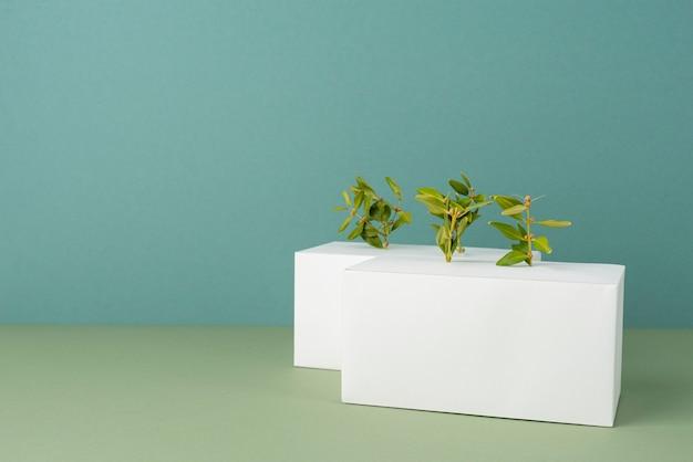 Duurzaamheidsconcept met geometrische vormen en groeiende plant