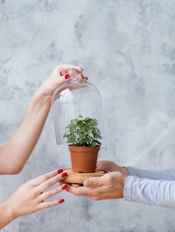 Duurzame ontwikkeling. natuur bescherming concept. plant in glazen koepel ondersteund door man en vrouw handen.