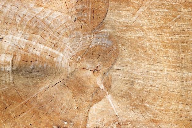 Dwarsdoorsnede oude boomstam textuur. natuurlijke houtstructuur