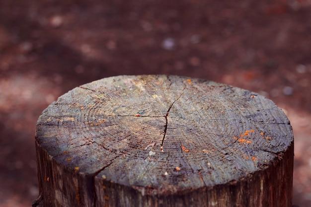 Dwarsdoorsnede van boomstam grijze oude stronk in de herfstbos houten natuurlijke sokkel