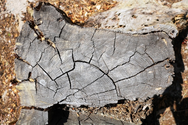 Dwarsdoorsnede van de boom