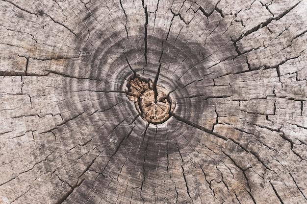 Dwarsdoorsnede van de boomstam, stomppatroon.