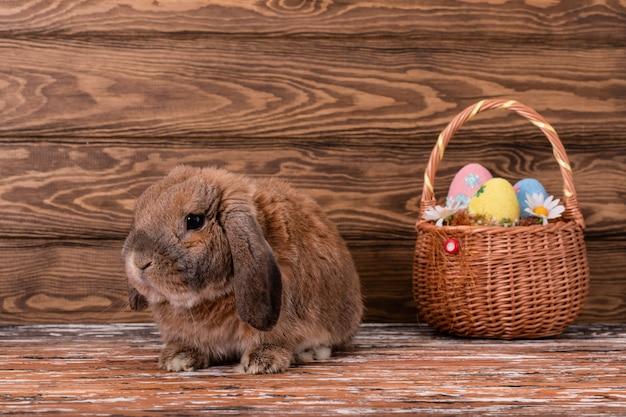 Dwerg konijnras schaap leugens. paashaas. mand met eieren.