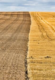 Echt landbouwveld waarop werd verbouwd en een nieuwe oogst tarwe werd verzameld, stoppels bleven achter