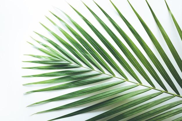 Echt tropisch blad op wit