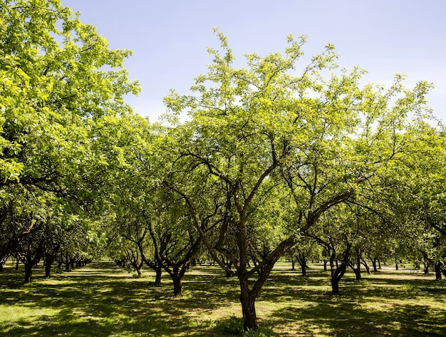 Echte natuur met groene bomen en gras verlicht door zonlicht, echte rust en afleiding in de natuur, frisse rust en lucht