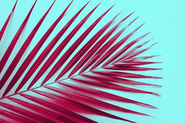 Echte tropische bladeren in kleurrijke mode-stijl Premium Foto