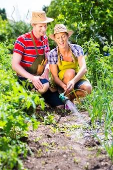 Echtpaar met tuinslang water gevende tuin