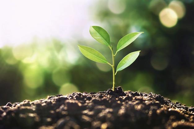 Eco aarde dag concept. boom groeit in de natuur met ochtendlicht