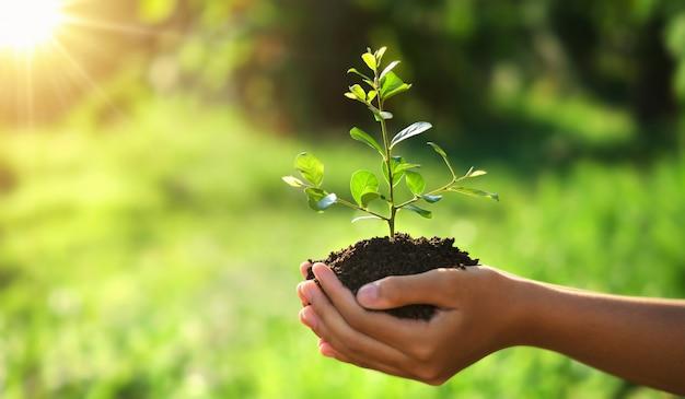 Eco aarde dag concept. hand met jonge plant in de zon en groene natuur