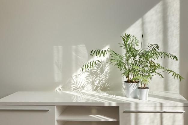 Eco stijlvolle interieur tafel met groene natuurlijke kamerplanten en schaduwen op de lichte muur vanuit het raam op een zonnige dag, kopieer ruimte. eco-werkplek.