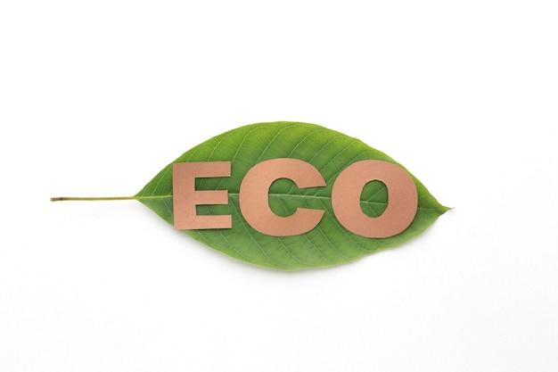 Eco-woord op blad