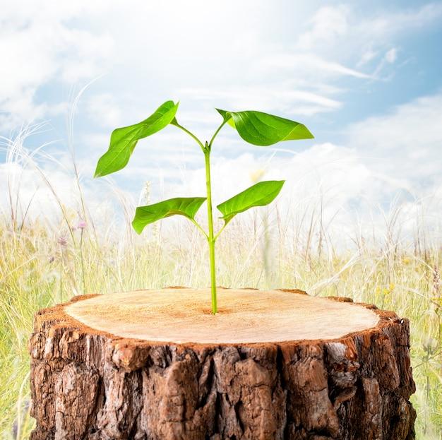 Ecologie concept. bedrijfsontwikkeling symbolisch.