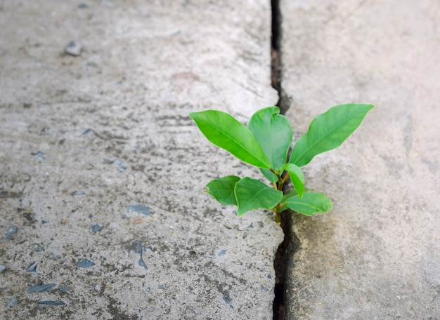 Ecologie plant boom en milieu droogte groeien op gebarsten straat