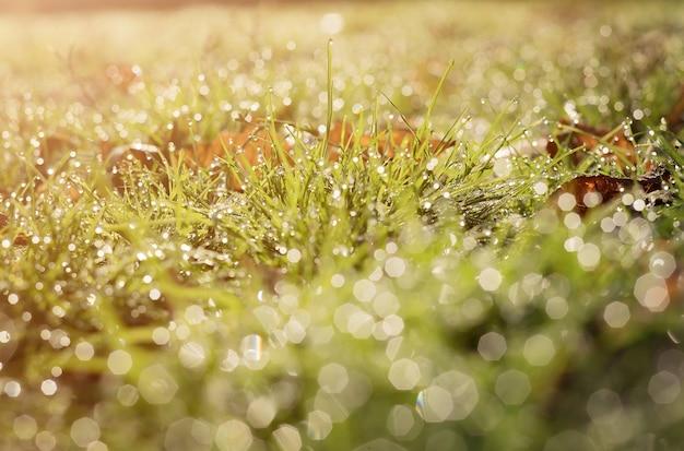 Ecologie wazig van groen gras en regen druppels f water. banier