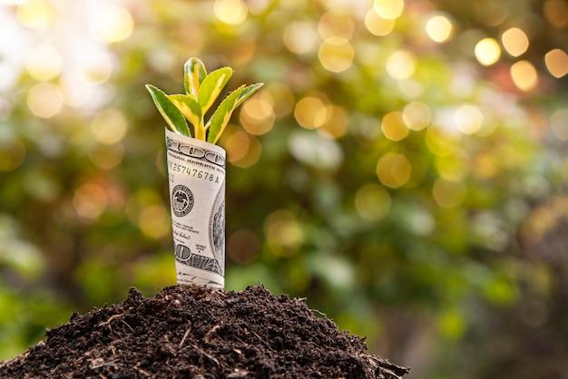 Economisch groeisymbool honderd dollarbiljet met een plant of blad dat uit de aarde groeit met een wazige groene achtergrond