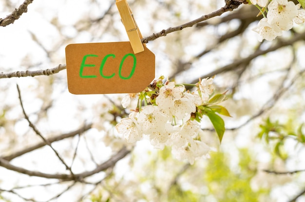 Ecoteken van de close-up in boom