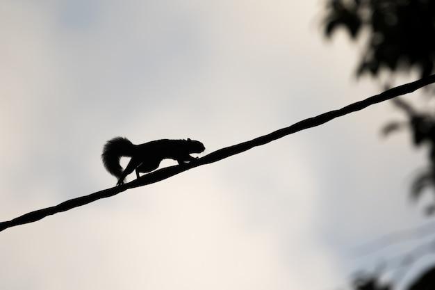 Eekhoorn in een haast over een touw