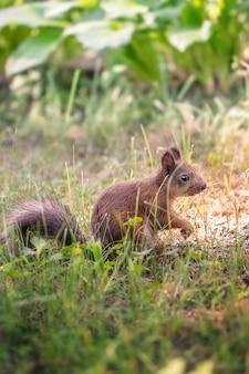 Eekhoorn in het park