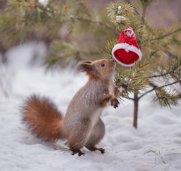 Eekhoorn in het winterbos
